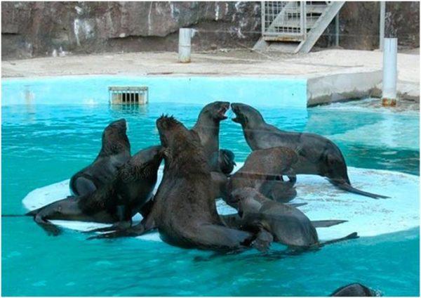 выступления моржей и морских котиков