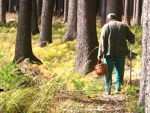 ne poteryatsya v lesu