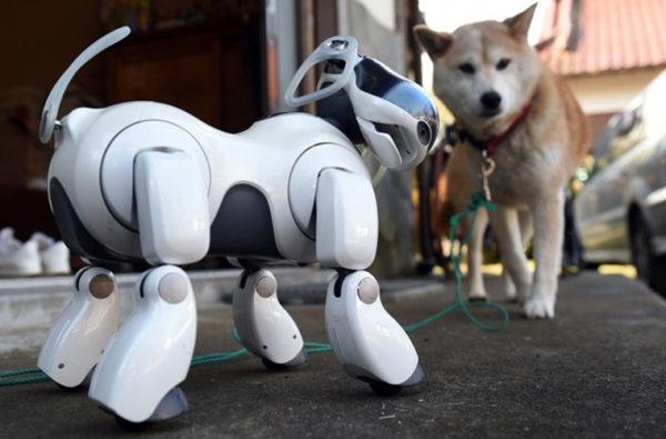 собаки-роботы