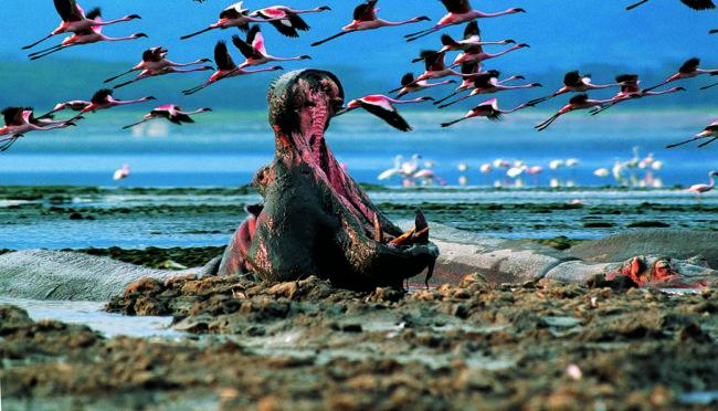 Озеро миллиона фламинго