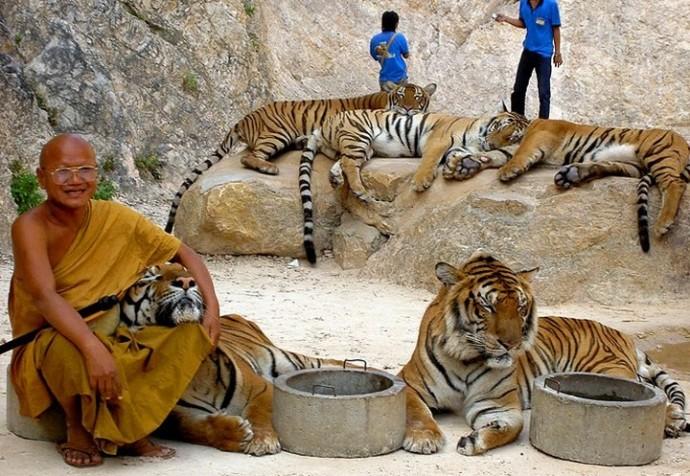 тигриный храм
