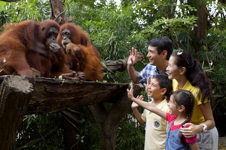 Зоопарк Сингапуре