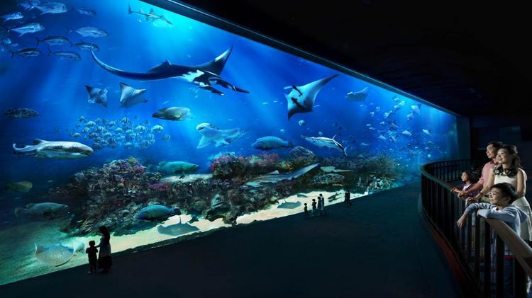 Сингапур океанариум