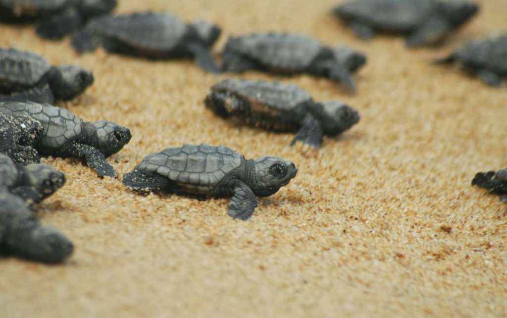 черепахи в Турции