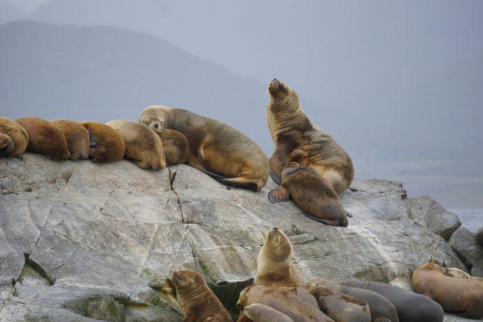Морские львы в Национальном парке